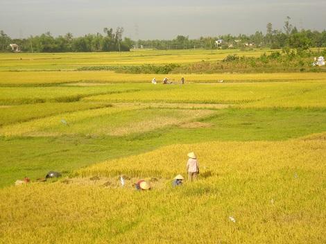 Việt Nam (Apr. 2008)